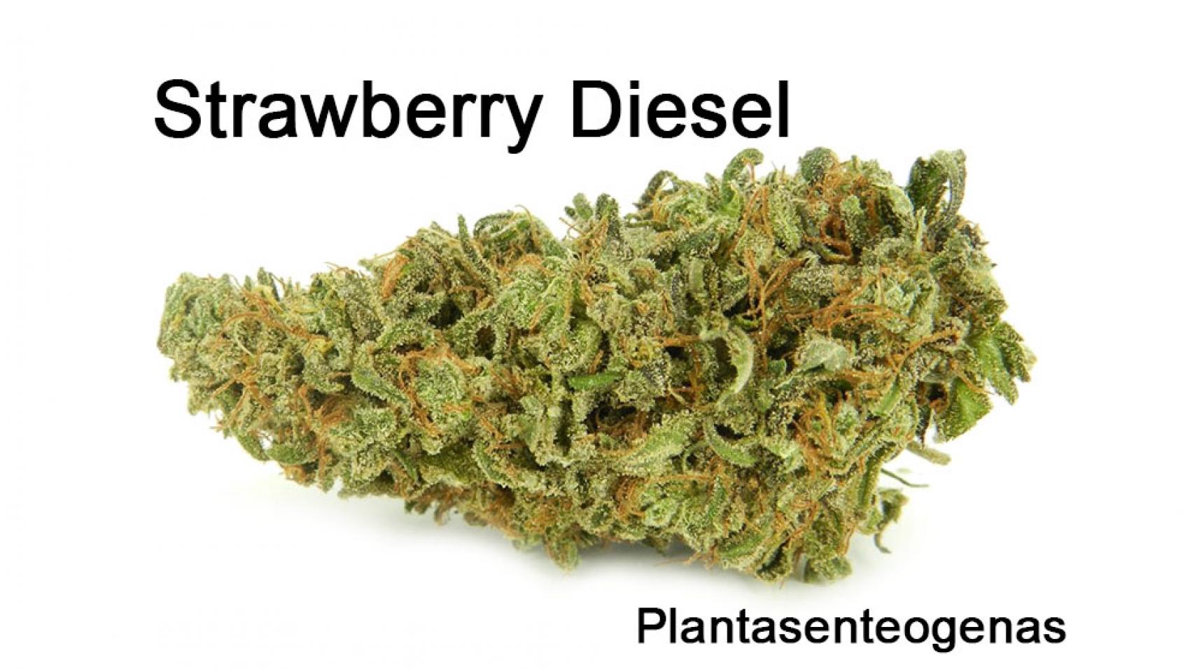 stawberry diesel