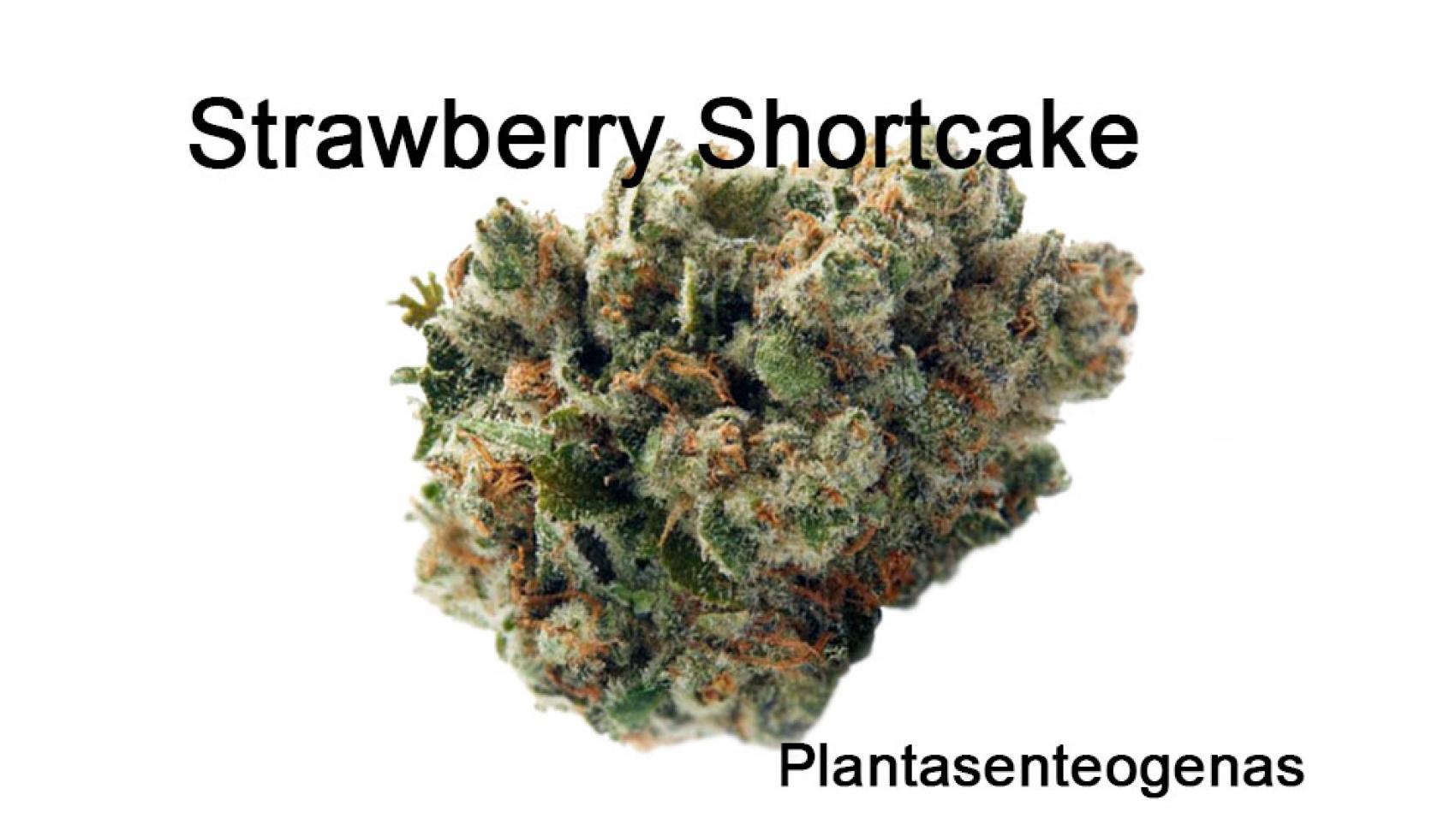 strawberry-shortcake-p-1