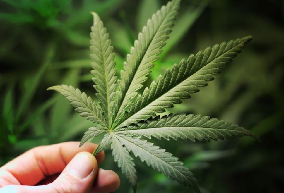 Marijuana-Discovering